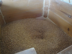 Grain at the Mill